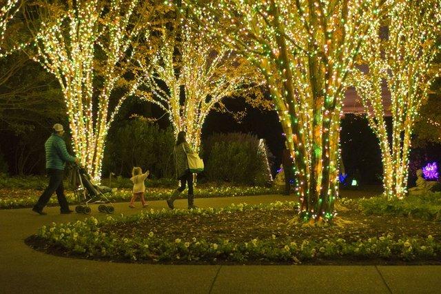 HolidayLightsTestCaitlinHarris_.jpe