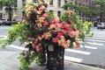 Flower Flash_2.jpg