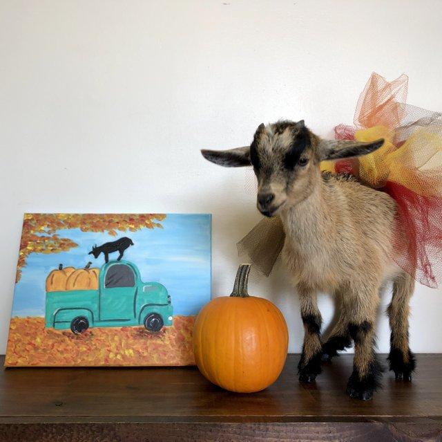 Halloween Paint.jpg