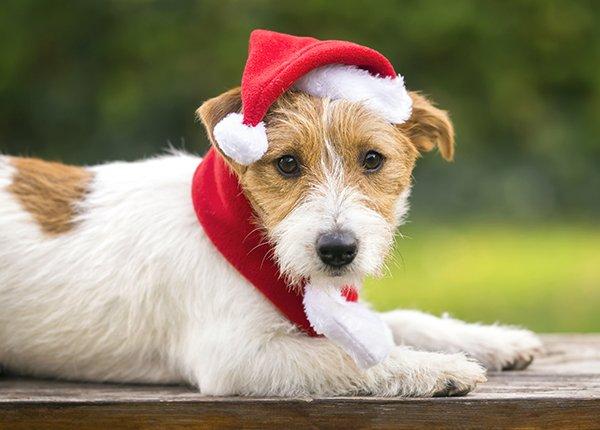 Santa Paws.jpg
