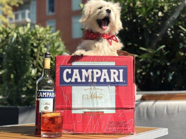 Campari & Canines 2019.jpg