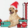 Pet Photos with Santa.JPG