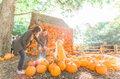 Harvest.jpg