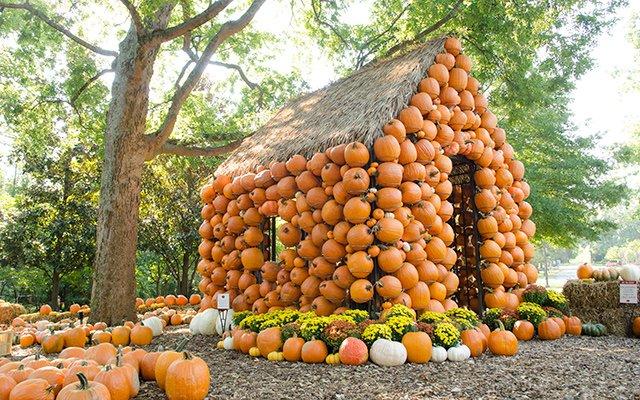 PumpkinHouse-640.jpeg