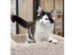 Cat-Rescue77.jpe