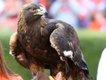 eagle.jpe